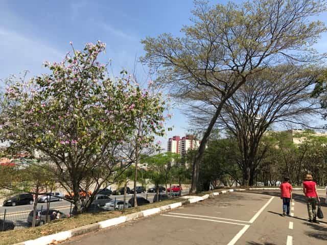 Parque Ceret - Pista de corrida e caminhada