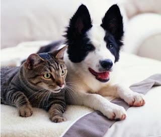 Donos de cães ou gatos devem providenciar passaporte ou certificado veterinário internacional para viajar com seu pet