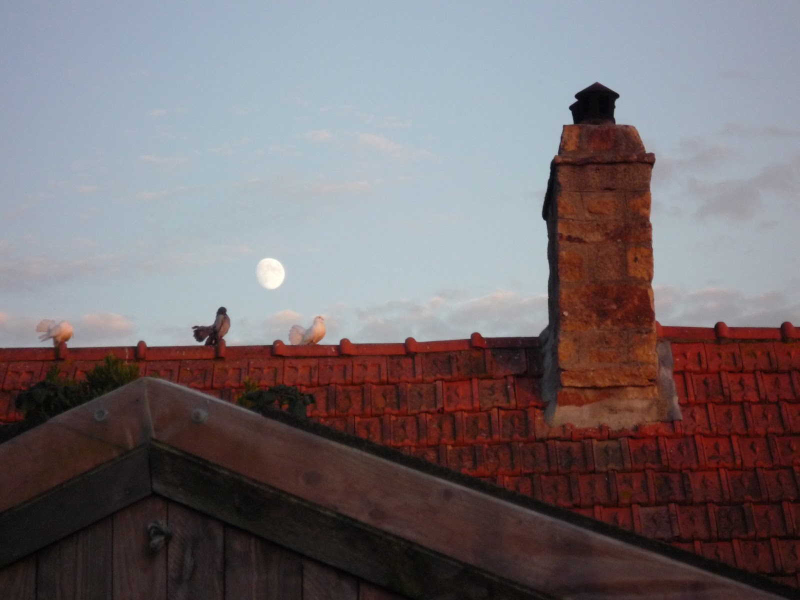 Fantails on a roof