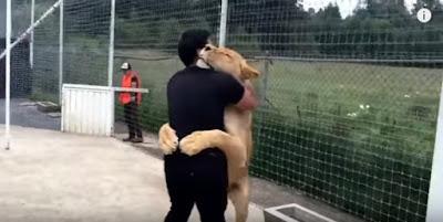 Ξανασμίγει με το λιοντάρι που έσωσε - Δείτε πώς τον ευχαριστεί!