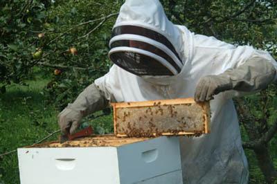 Θεσπρωτία: Ενημέρωση για τους μελισσοκόμους