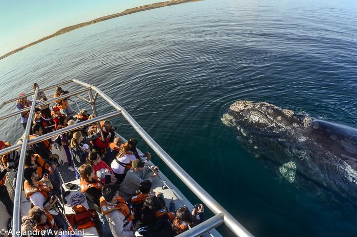 avistajes de ballena en Puerto Madryn Peninsula Valdes