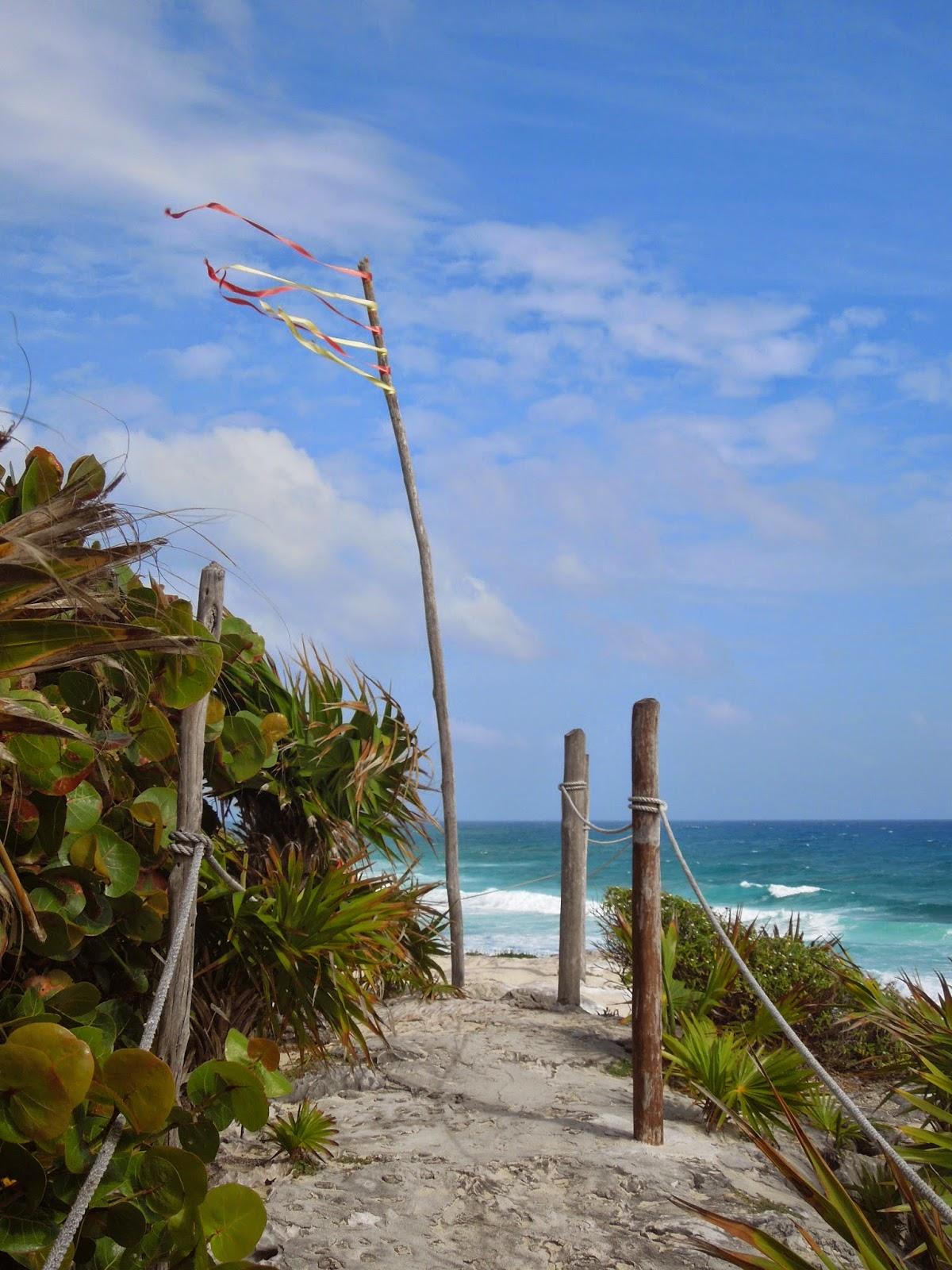 Coconuts cliffs