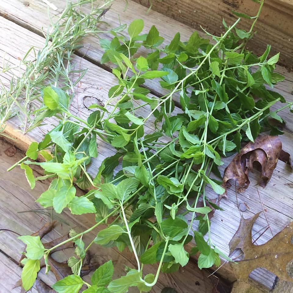 Growing Herbs, a Medicinal Herb Garden