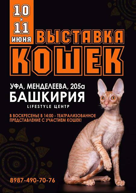 10-11 июня в Уфе пройдет Международная выставка кошек — СКАЗОЧНЫЕ КАНИКУЛЫ
