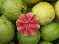 gambar buah jambu biji, jambu batu
