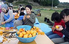 甚吉!渋柿干し柿作り体験