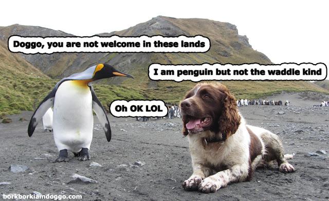 Penguin Doggo