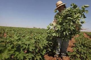 Agricultor poderá não ser obrigado a contribuir com a Previdência
