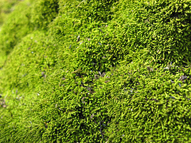 Humble moss helped create our oxygen-rich atmosphere