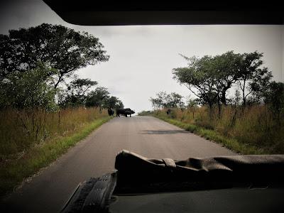 Kruger National Park, South Africa, safari vehicle, rhinos