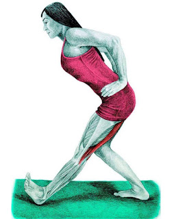 daftar otot lutut lengkap