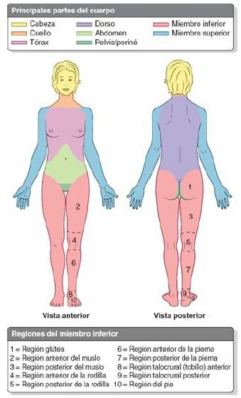 Je Fisio: Métodos de estudio de la anatomía