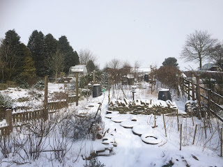 Snow filled garden