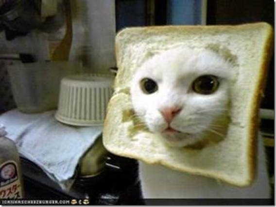 Low DPI Photo of Inbread cat - borrowed from the net