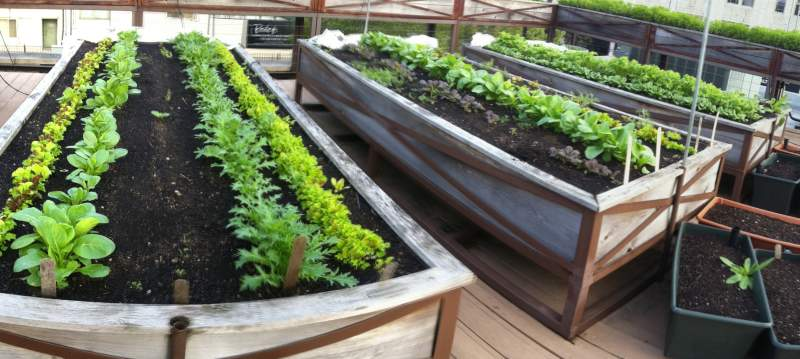 Raised Bed Gardens On Rooftops - Things To Consider | Green Patches ...