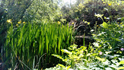 The Wildlife Trust's small pond at Sevenoaks. Nature Blog.
