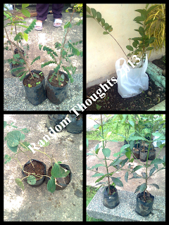 fruit trees 2