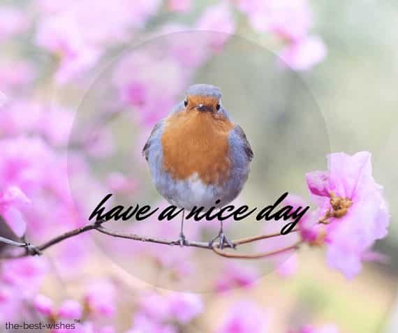 good morning wishes with birds pic