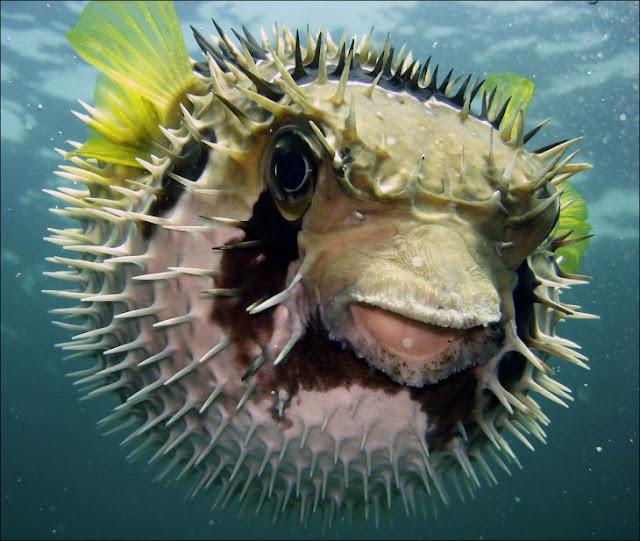 Estas son 10 de las criaturas más letales en el planeta