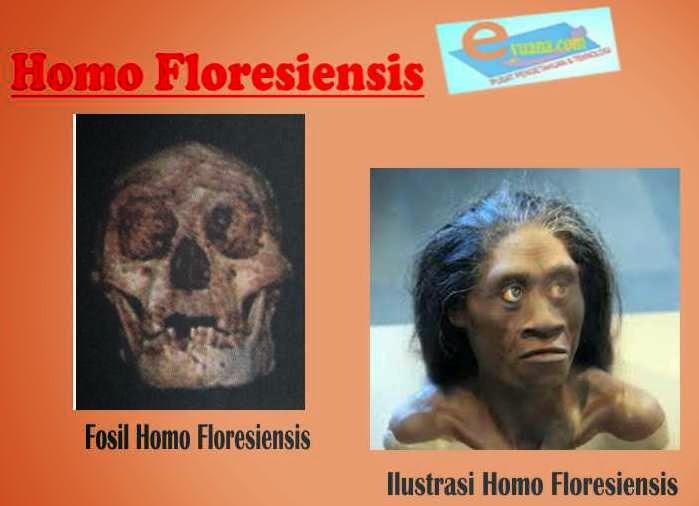 Gambar Manusia Purba Homo Floresiensis