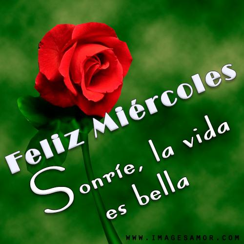 Feliz miércoles con imágenes bonitas de rosas para whatsapp