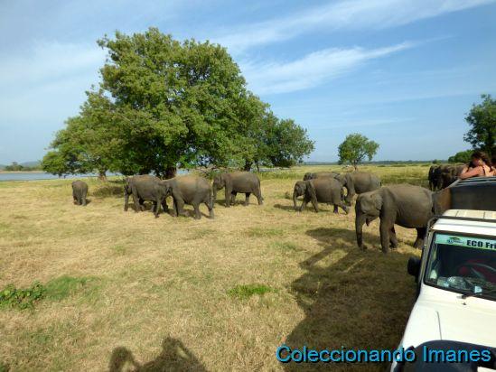 Safari con elefantes en Minneriya