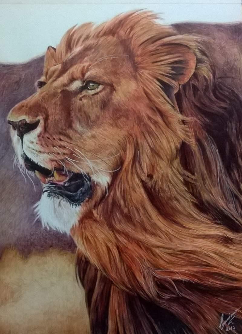 cassiano desenhista leão desenho realista feito com canetas