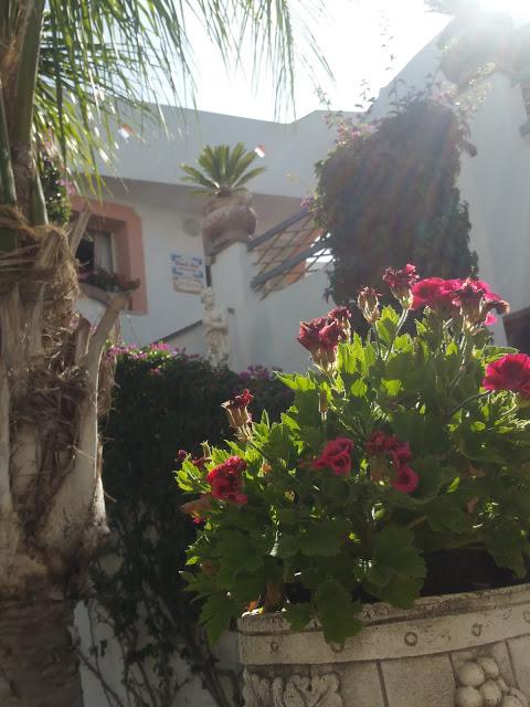Gita ad Ischia
