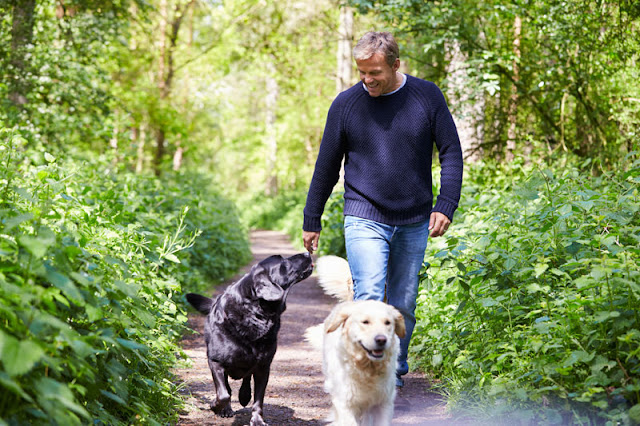 A man walks his two dogs outdoors. Positive reinforcement is a good alternative to negative reinforcement in dog training