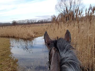 Konie, kuce, jazda konna, jazda w terenie