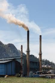 limbah cangkang sawit energi