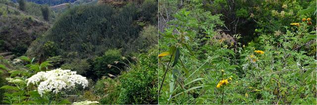 Vegetasi Dataran Tinggi Malino ||JelajahSuwanto