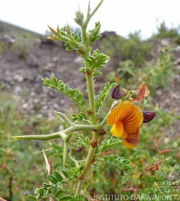 arbustos del monte Añagua
