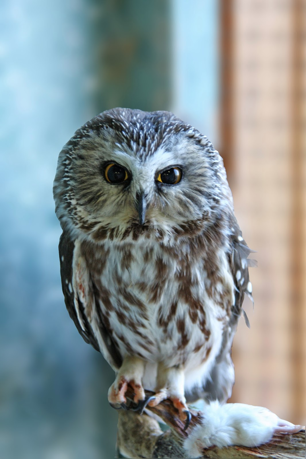World Bird Sanctuary: Aspen