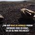 Miles de animales mueren a causa de los incendios de palestinos a campos israelíes (VIDEO)