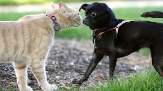 interacción perro y gato, ambos curiosos uno del otro, pero alertas