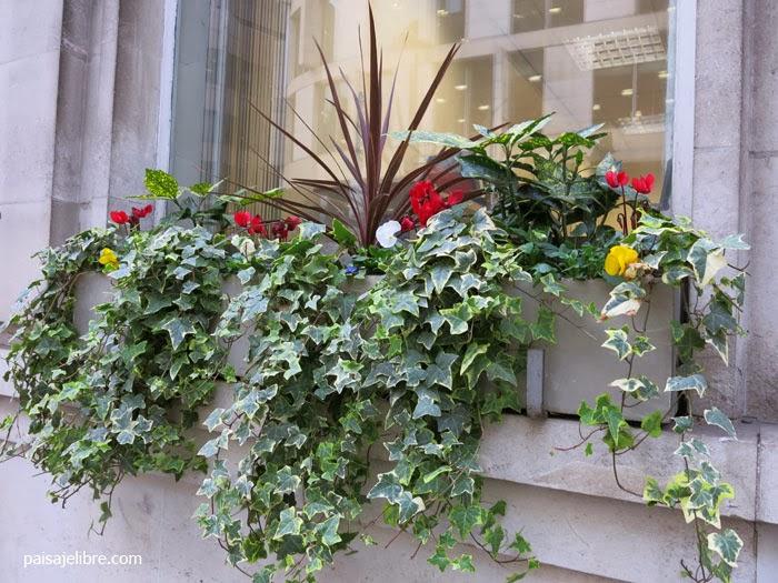Composiciones de plantas para jardineras en invierno Plantas jardineras exterior
