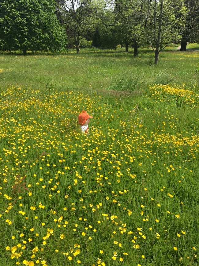 toddler-sat-in-buttercup-field-Dyffryn-Gardens