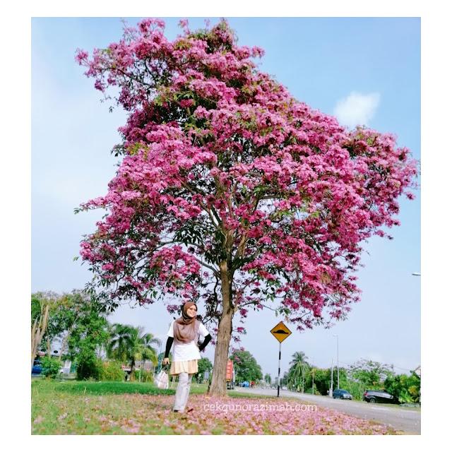 birthday girl, sakura malaysia, musim bunga malaysia, #sakuramalaysia, birthday cikgu, april girl