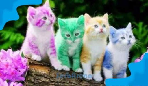 Arti Mimpi Digigit Kucing Warna Menurut Primbon