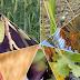 Οι επτά ιερές τροφές της Βίβλου στο Ισραήλ, που βελτιώνουν την υγεία