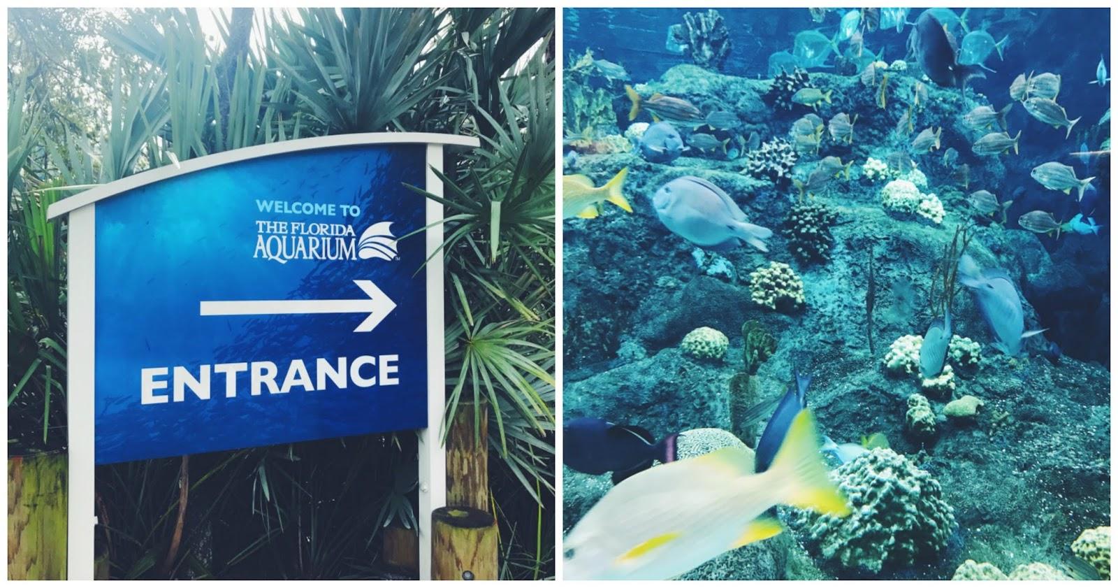 florida aquarium2