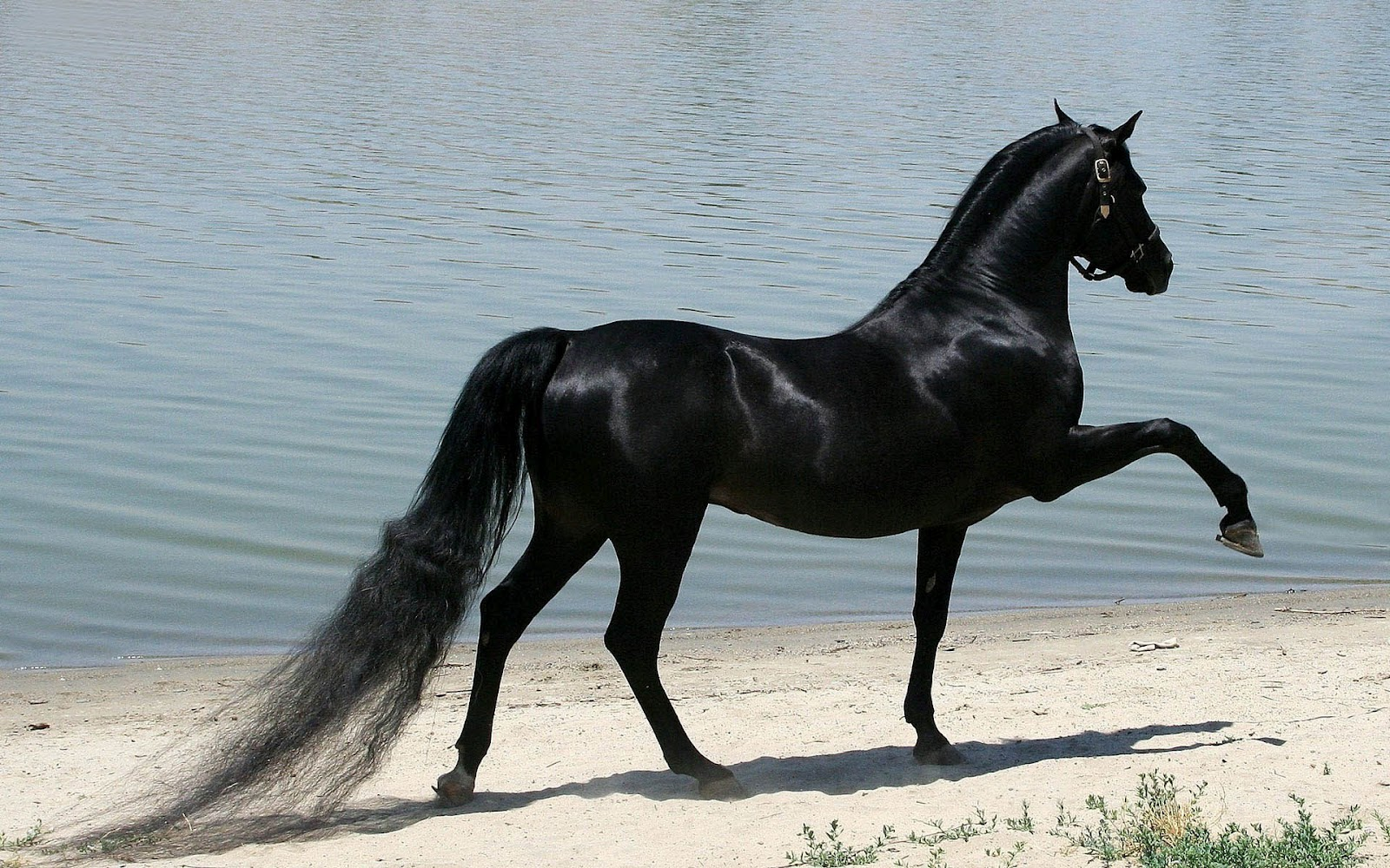 Fantastic   Wallpaper Horse Ultra Hd - Cute-Black-Horse-Wallpaper  Trends_6610082.JPG