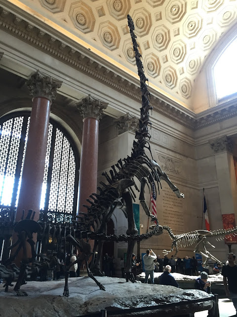 Venture & Roam: Greeted by Residents at the Entrance of the American Museum of Natural History, fossils, dinosaurs, apatosaurus