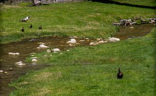 Il torrente Tramazzo a Tredozio in Romagna