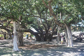 Under The Banyan.