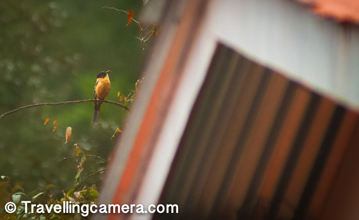 There were some birds that we saw from a distance that looked like flycatchers. However, with our limited knowledge of birds, we are still so helpless that we were not able to identify them properly. If you could help us with this, it would be simply great.