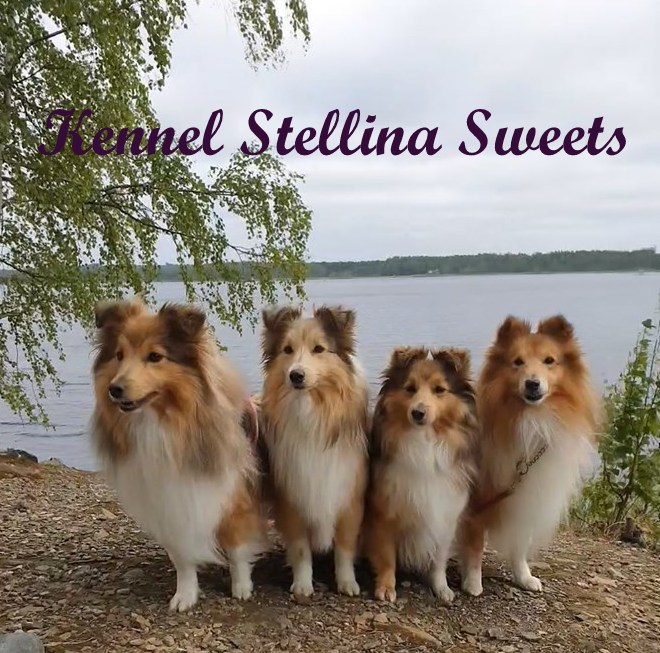 Kennel Stellina Sweets