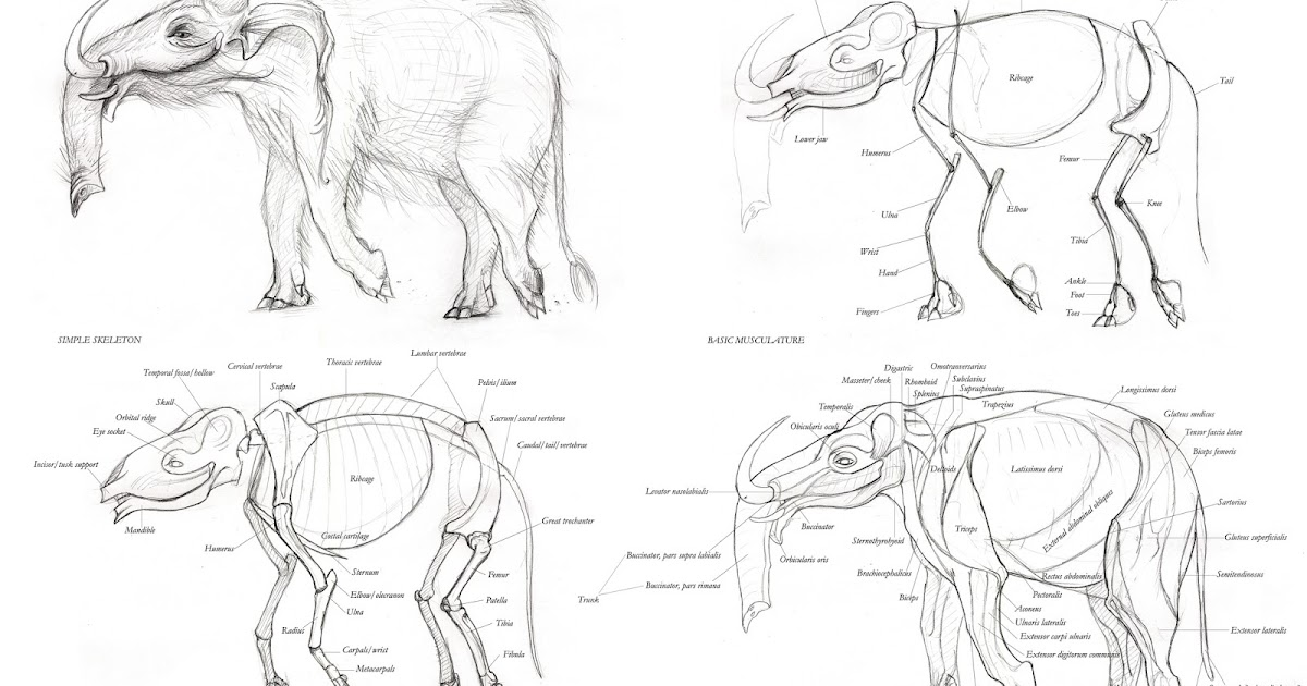 Rosemary Chalmers Concept Art And Illustration Creature Anatomy
